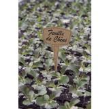 Étiquette à planter à base de Miscanthus  - 15 cm